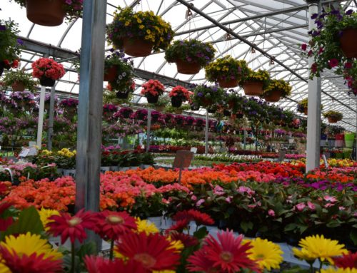 It's Flower Time! What to Plant and Where to Plant it