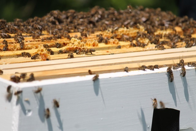 Save the Bees – How Gardeners Can Help – Gullos Garden Center