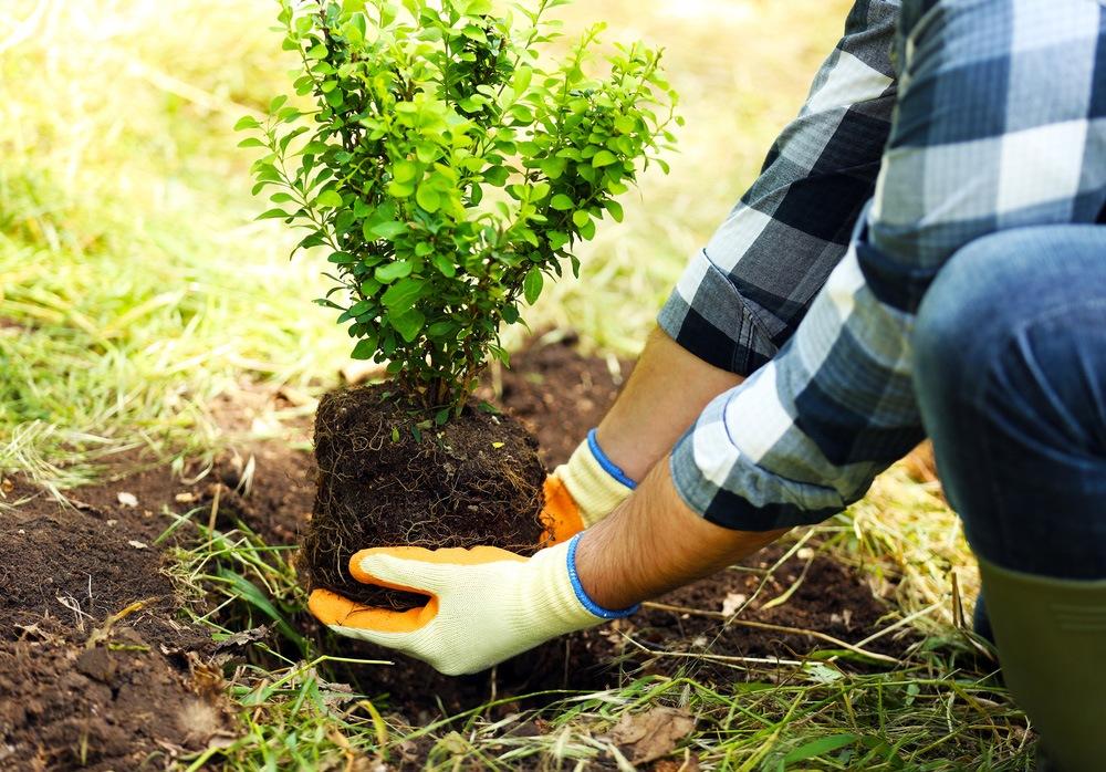 Top 10 Questions To Ask Your Landscape Designer Gullos Garden Center